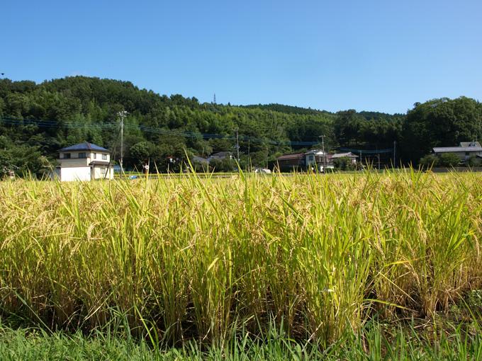 Izu200909061