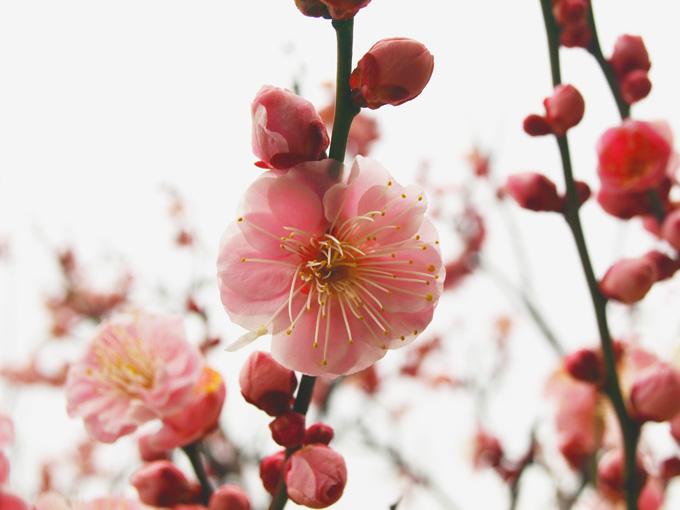 Kofun201003079