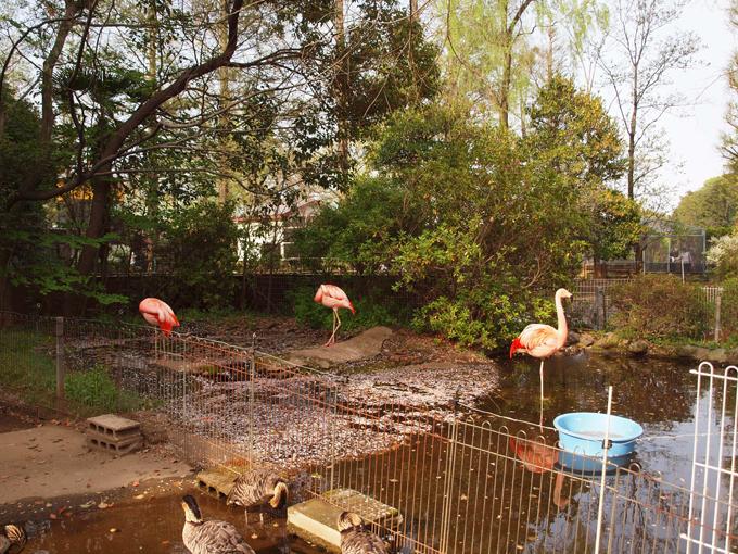 Zoo2011041811