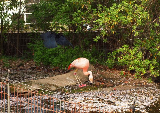 Zoo2011041812