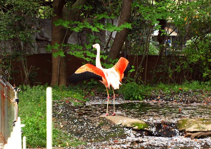 Zoo2011041813