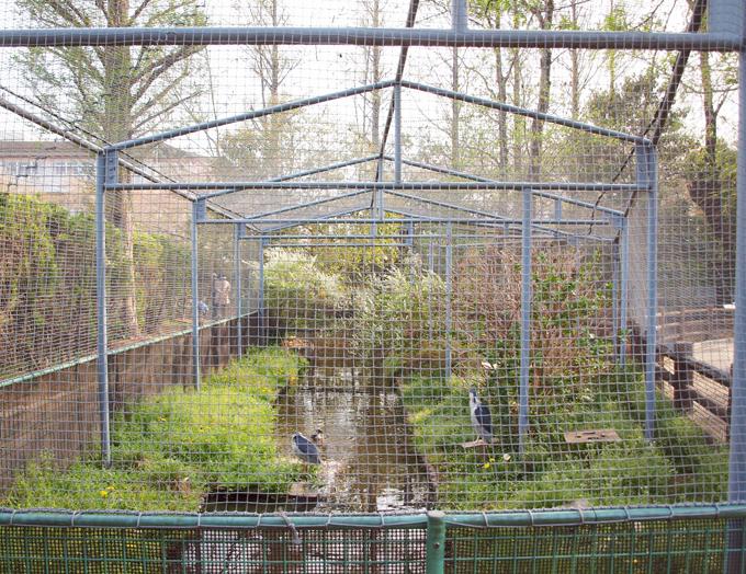 Zoo2011041814