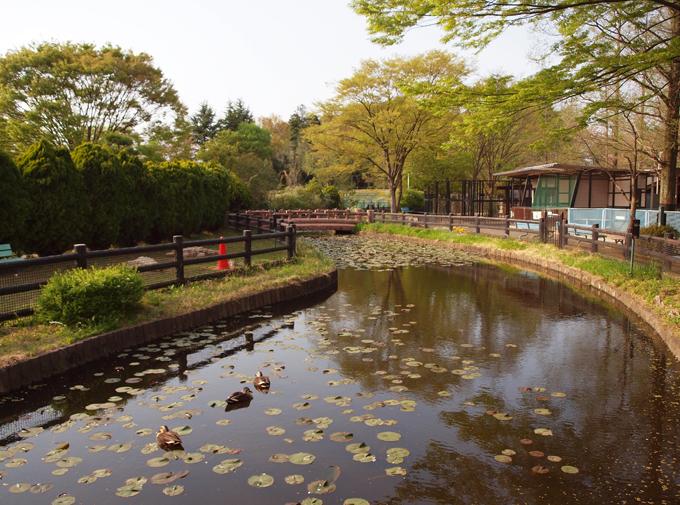 Zoo201104185