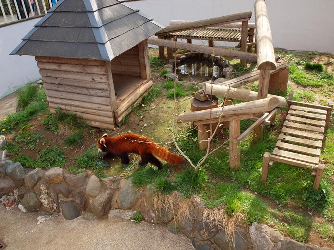 Zoo201104186