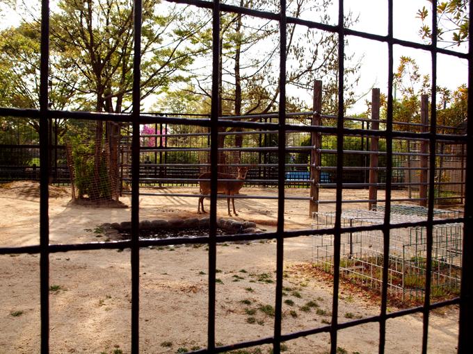 Zoo201104187