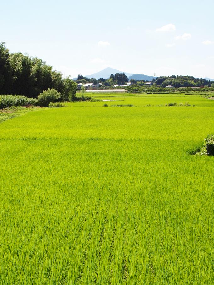 Sawaranotaisai20114