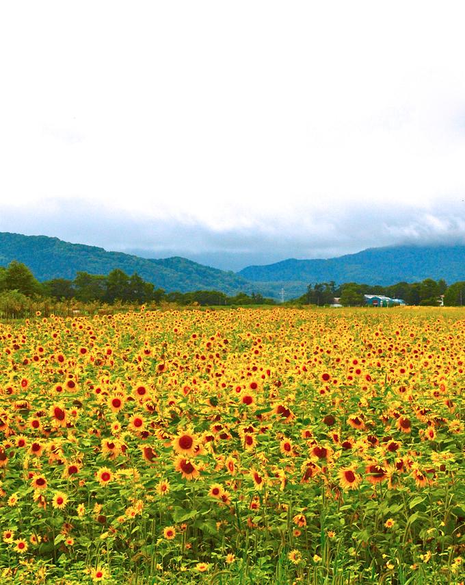 Himawari20111