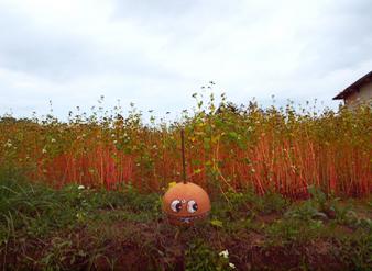 Hokkaido200090111200